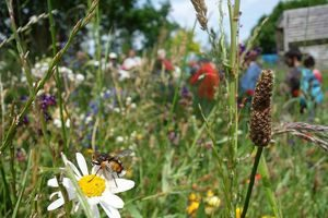 Portes ouvertes abeilles dans le jardin de la Maison du Parc